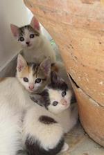 Three Darling Kittens Journal