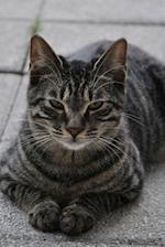 So Sweet Gray Tabby Cat on the Sidewalk Pet Journal