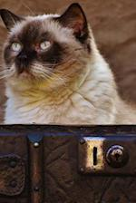 British Shorthair Cat Sitting in an Antique Leather Suitcase Journal