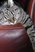 A Napping Gray and Black Striped Tabby Cat Journal