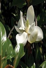Floral Journal Fresh Magnolia Bloom