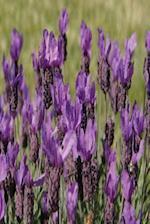 Floral Journal Lavender Meadow Flowers