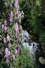 Floral Journal Purple Rhododendron Beside Creek