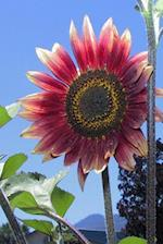 Floral Journal Red Sunflower