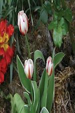 Floral Journal Tulips Garden