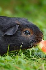 A Black and Tan Guinea Pig Eating Watermelon Up Close Journal