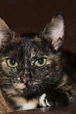 Beautiful Green-Eyed Tortoiseshell Kitty Cat Journal