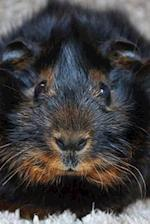 What a Face! Adorable Black and Tan Guinea Pig Up Close Journal