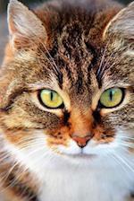 A Beautiful Green-Eyed Domestic Shorthair Cat Pet Journal