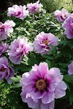 A Lush and Lovely Pink Peony Flower Bush Journal