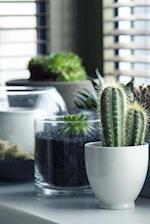 Cool Succulents on a Windowsill Houseplants Journal