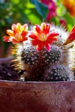 An Awesome Mammillaria Cactus Plant in Bloom Journal