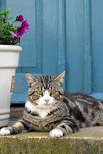 Pretty Tabby Cat on the Porch in Front of a Blue Door Journal