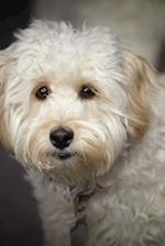 That Face! Darling Little White Labradoodle Puppy Dog Journal