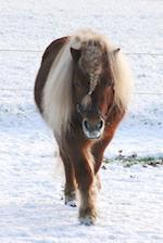 Well Hello There Cute Pony with a Braided Mane in the Snow Journal