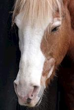 Close-Up of a Lovely Chestnut Horse with a White Face Journal