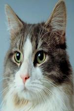 Alert Cat Photo Journal