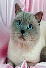 Blue Eyed Cat Photo Journal