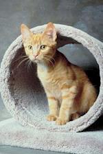 Cute Tabby Kitten Playing Cat Photo Journal