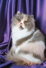 Fluffy Kitty Cat Photo Journal