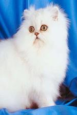 Innocent White Cat Photo Journal