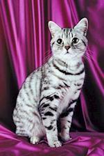 Posing Cat Photo Journal