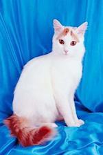 Pretty Kitty White Cat Photo Journal
