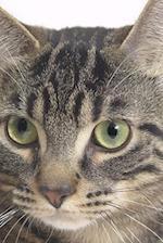 Tiger Cat Face Photo Journal