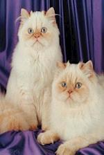 Two White Cats Photo Journal