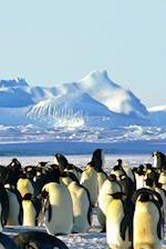 Emperor Penguins (Journal / Notebook)