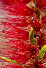 Native Australian Plants (Journal / Notebook)