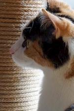 Pretty Tri-Color Domestic Shorthair Cat in Profile Pet Journal