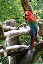 Cool Colorful Parrot in a Tree Tropical Bird Journal