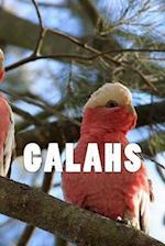 Galahs (Journal / Notebook)