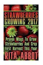 Strawberries Growing 2017