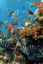 Reef Fishes (Journal / Notebook)