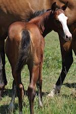 An Adorable Bay Colt with a White Face Horse Journal