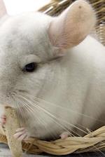 An Adorable White Chinchilla Pet Journal