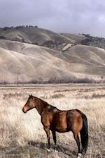 A Beautiful Brown Horse in a Winter Meadow Journal