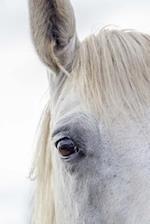 A Wonderful White Horse Up Close Portrait Journal