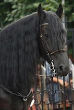 Strikingly Beautiful Brown Horse with a Flowing Black Mane Portrait Journal