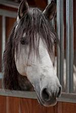 A Simply Lovely Gray Mare Portrait Horse Journal