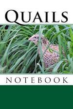 Quails