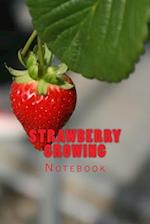 Strawberry Growing