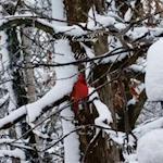My Calendar - 2018 - Red Cardinal Edition