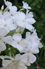 For Mom Phlox