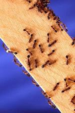 Insect Journal Fire Ants on Wood Entomology