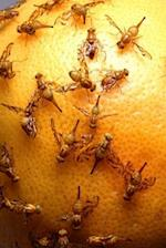 Insect Journal Fruit Flies on Grapefruit Entomology
