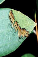 Insect Journal Sawfly Larvae Entomology