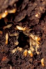 Insect Journal Termites at Work Entomology
